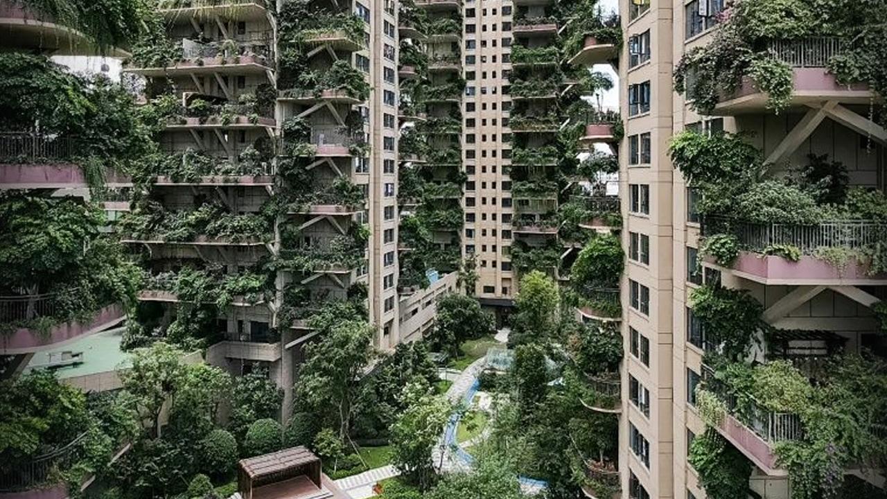 Residentes de China huyen de sus hogares en las alturas; plantas y mosquitos invaden sus departamentos