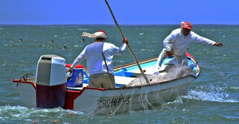 Bloquea EE.UU. certificación de camarón mexicano; denuncian deficiencias en playas
