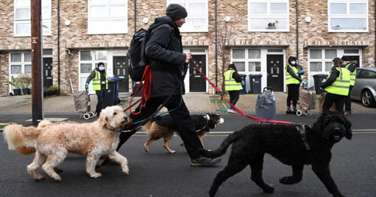 Reino Unido endurece sanciones ante aumento de robo de perros